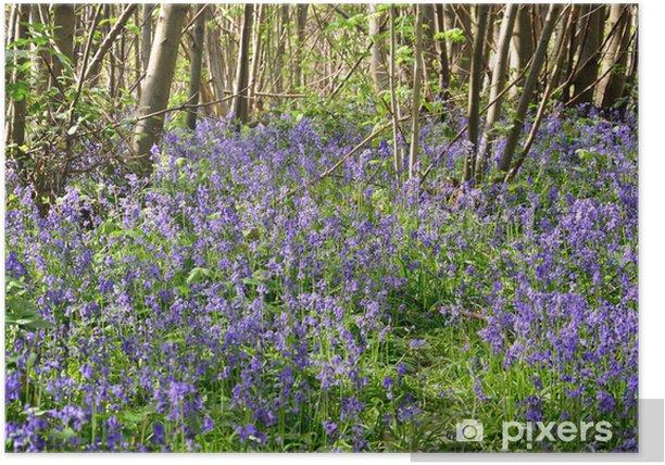 Plakat Bluebells w lesie - Pory roku