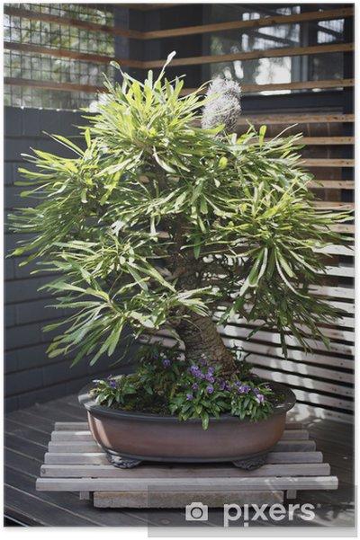 Plakát Bonsai Tree - Stromy
