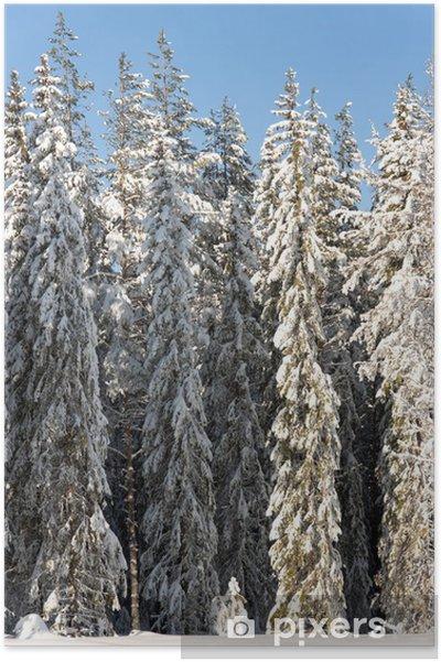 Plakát Borovice ve sněhu - Roční období