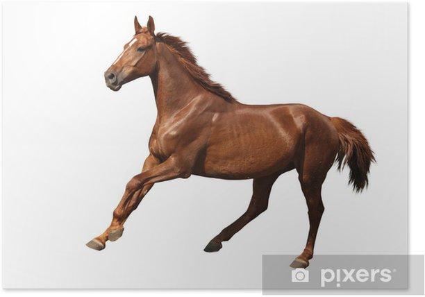 Plakat Brązowy koń cantering darmo samodzielnie na białym tle - Naklejki na ścianę
