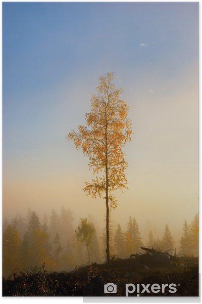 Plakat Brzoza Drzewo jesienią - Pory roku
