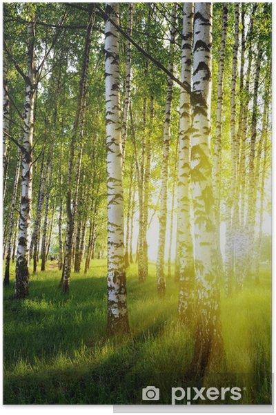 Plakat Brzozy w lesie latem - Style