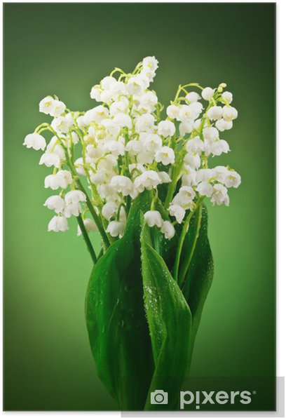 Plakat Bukiet białych konwalii - Kwiaty