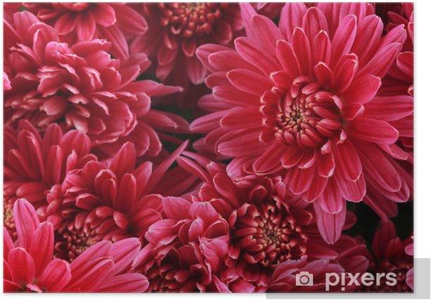 Plakat Bukiet różowy jesienią chryzantemy, z bliska - Kwiaty