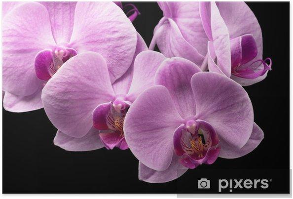 Plakat Bukiet storczyków magenta - Kwiaty