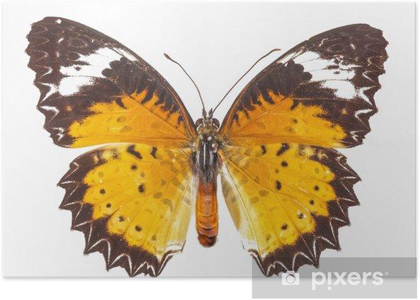 Plakát Butterfly s izolovanou pozadí - Savci