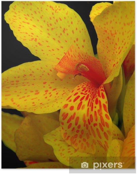 Plakat Canna żółta orchidea - Dom i ogród