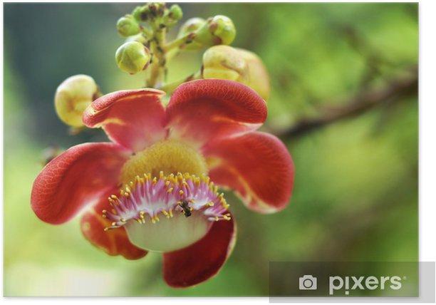 Plakat Cannon Ball Drzewo - Kwiaty