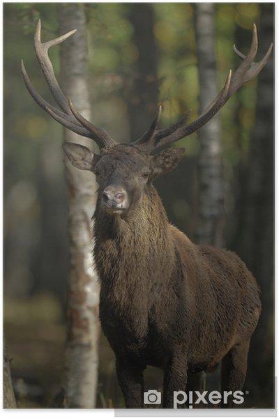 Plakát Cerf2 - Savci