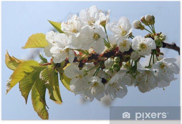 Plakat Cerisier en fleurs - Tematy