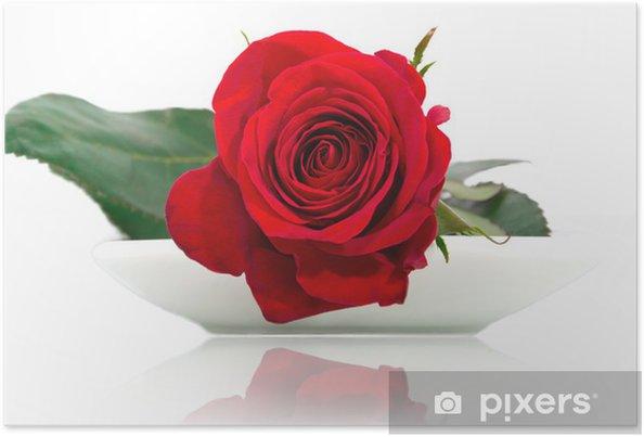 Plakát Červená růže na bílém talíři - Květiny