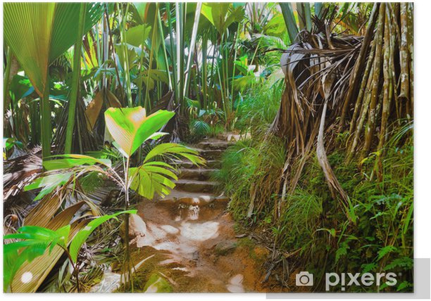 Plakát Cesta v džungli - Vallée de Mai - Seychely - Témata