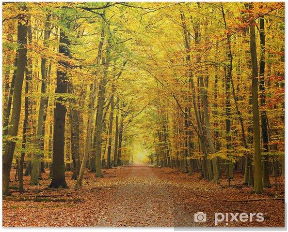 Plakát Cesta v lese podzim - Témata