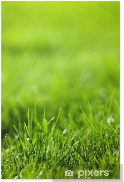 Plakat Charakter tła: zielony soczysty trawy. - Tekstury