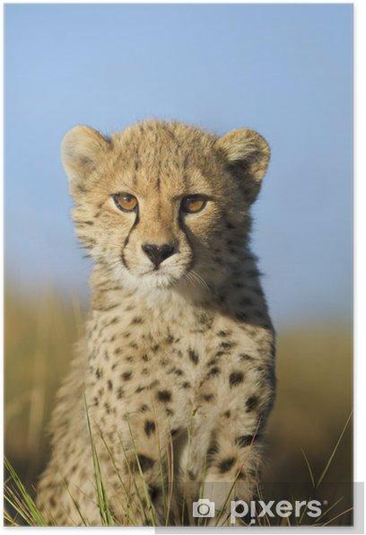 Plakat Cheetah cub bliska - Wakacje