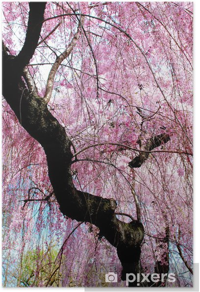 Plakat Cherry Blossom Shower - Criteo