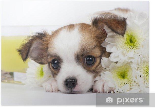 Plakat Chihuahua puppy z chryzantemami i świeca żółty - Ssaki