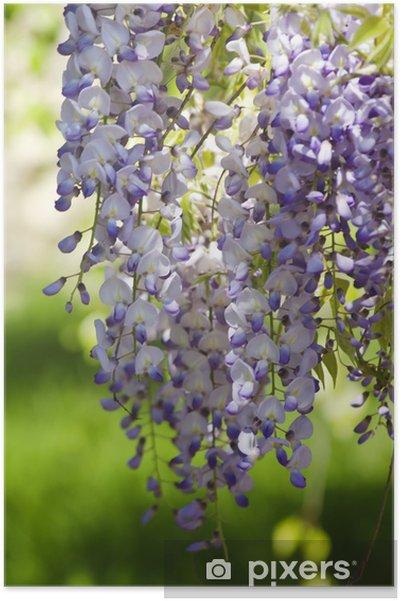 Plakát Chomáčkovitý - Květiny