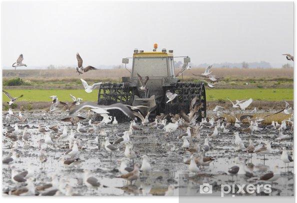 Plakat Ciągnik fangueando - Rolnictwo