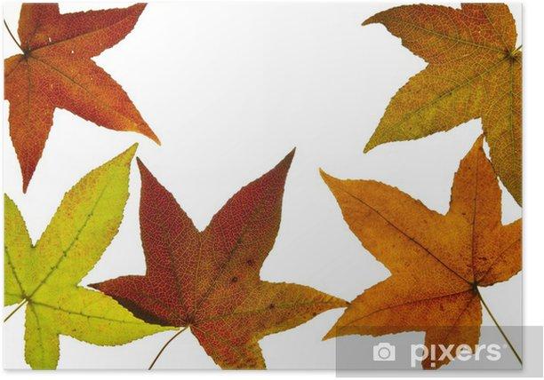 Plakat Ciecz upadku drzewa Amber Leaves Backlit - Pory roku
