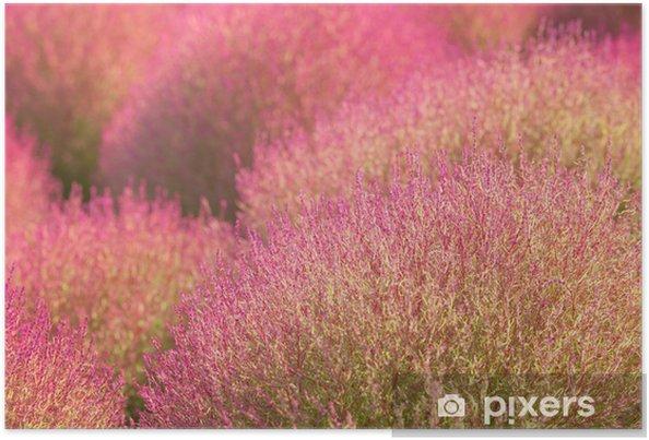 Plakát Close - up kochias hill in autumn season at Hitachi seaside park , Ibaraki prefecture , Japan - Stromy