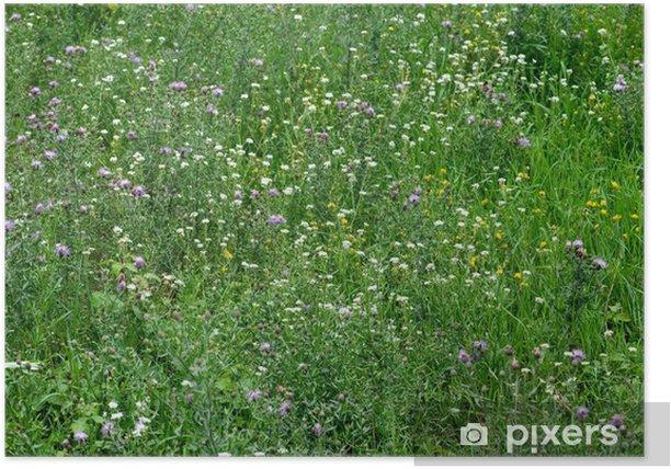 Plakat Close-up obraz wiosennej łące z Green Grass and Field flowe - Pory roku