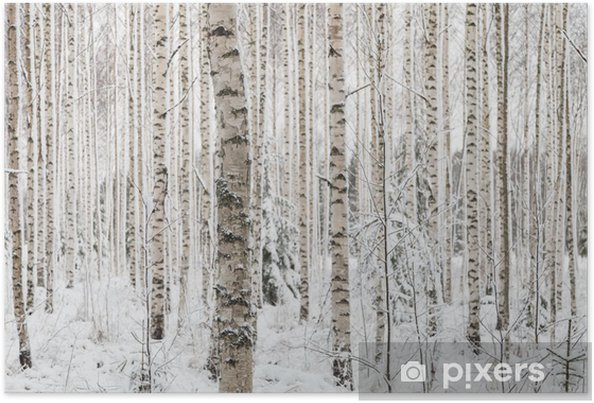 Plakat Close-up z drewna brzozowego w zimie w Finlandii - Pory roku
