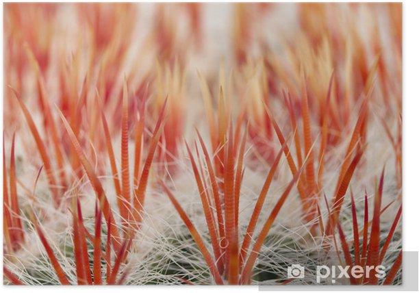 Plakát Close up z kaktusu - Rostliny