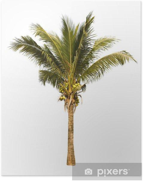 Plakat Coconut palm tree - Naklejki na ścianę