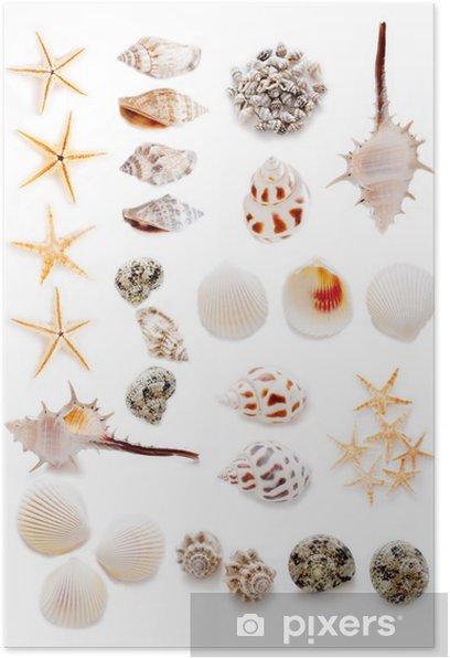 Plakat Collage z muszli - Zwierzęta żyjące pod wodą
