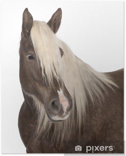 Plakat Comtois koń, konia projekt, Equus caballus, 10 lat - Ssaki