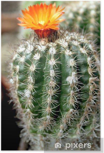 Plakat Copiapoa kaktus - Rośliny