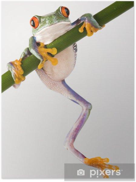 Plakat Crazy frog - Żaby