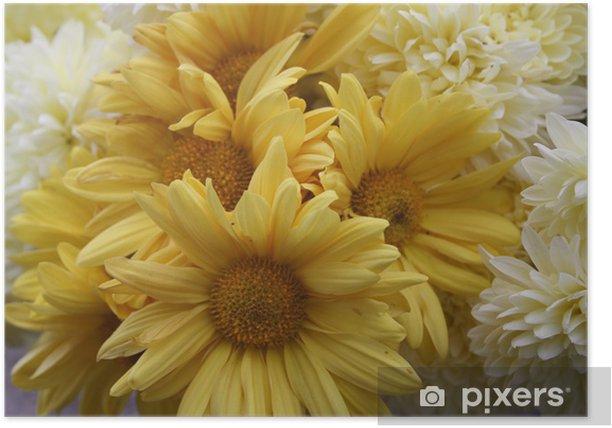 Plakat Crisantemo.aster. - Kwiaty