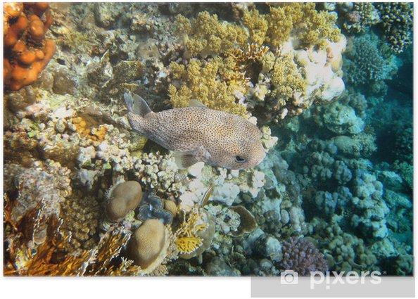 Plakát Čtverzubec - Vodní a mořský život