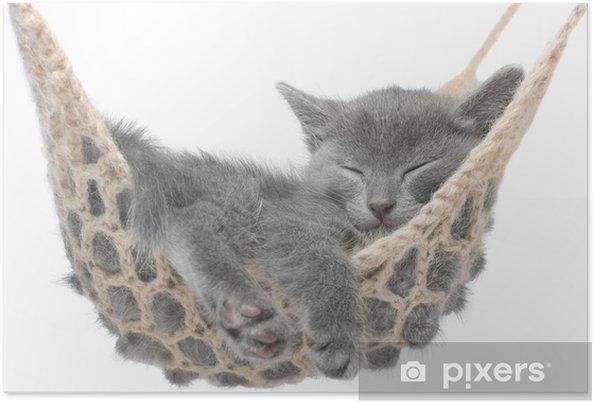 Plakat Cute kitten szary leżącego w hamaku - Wakacje