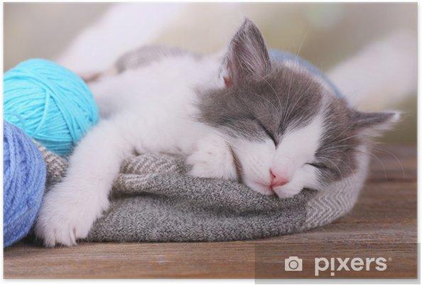 Plakat Cute mały kotek śpi na kratę, na jasnym tle - Ssaki