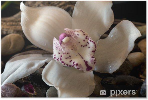 Plakát Cymbidium nebo lodí orchidej - Květiny