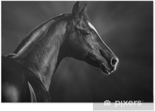 Plakat Czarno-biały portret arabskiego ogiera - Tematy