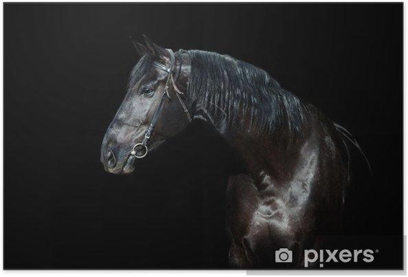 Plakat Czarny koń wyizolowanych na czarnym tle - Tła