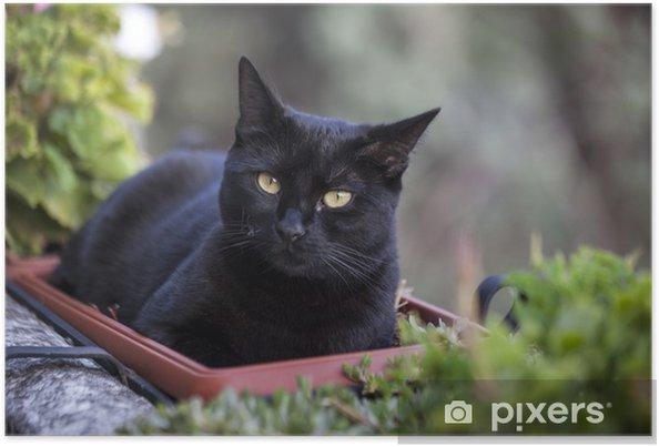 Plakat Czarny Kot Leży Na Roślinach Drzwi Na Tarasie Pixers
