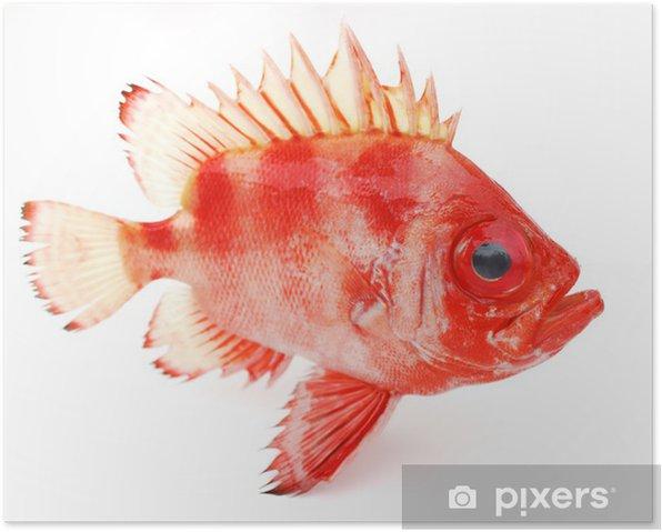 Plakat Czerwona ryba - Naklejki na ścianę