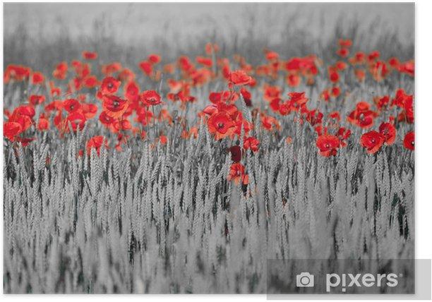 Plakat Czerwone maki czarny biały - Tematy