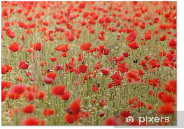 Plakat Czerwone maki - Pory roku