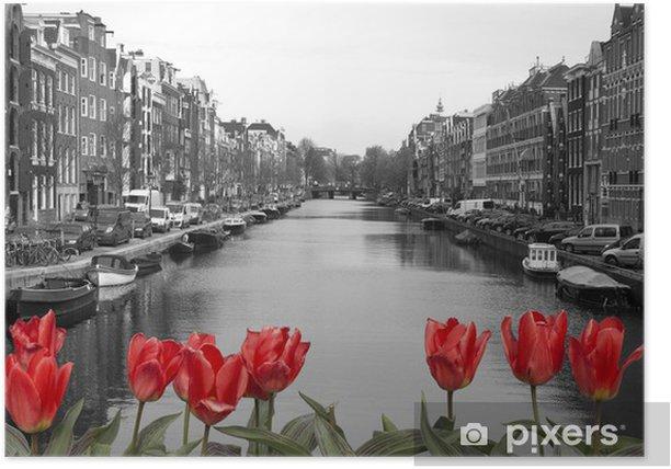 Plakat Czerwone tulipany w Amsterdamie - Holandia
