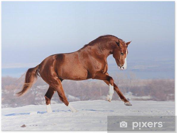 Plakat Czerwony koń na śniegu w zimie - Wolność