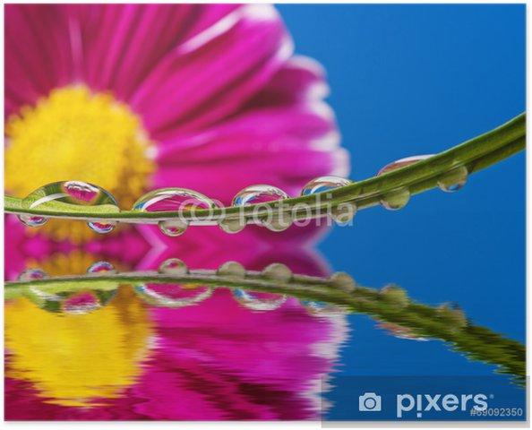Plakat Czerwony kwiat i krople rosy na liściu - Kwiaty