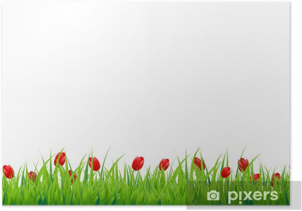 Plakat Czerwony tulipan border - Naklejki na ścianę