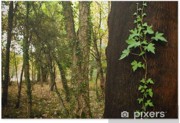 Plakat Dąb korkowy las - Lasy