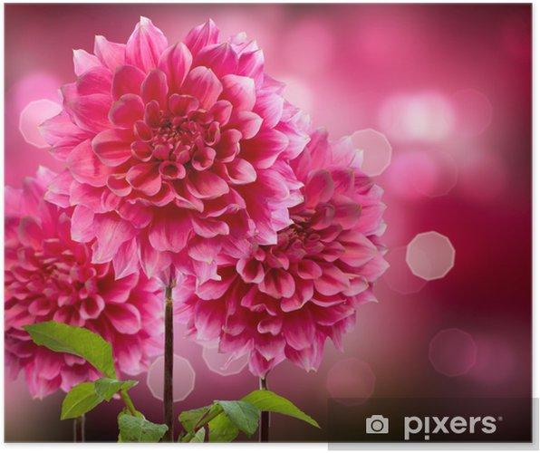 Plakát Dahlia Podzimní květiny - Domov a zahrada